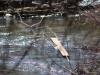 creek plank